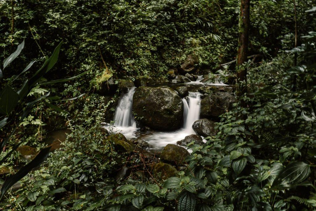 Small double waterfall in lush greenery