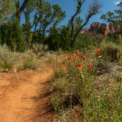 5 Epic Things to Do in Zion National Park (Other Than Hiking)
