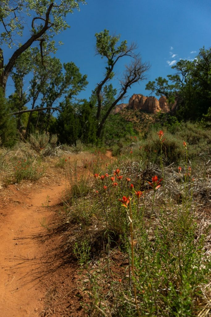 Red wild flowers next to dirt trail