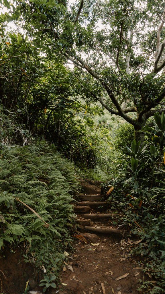 Dense green forest on the Hanakāpīʻai Falls Trail