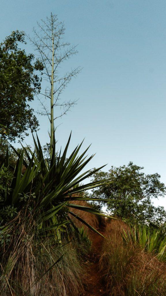 Large green fauna of the Kalalau Trail