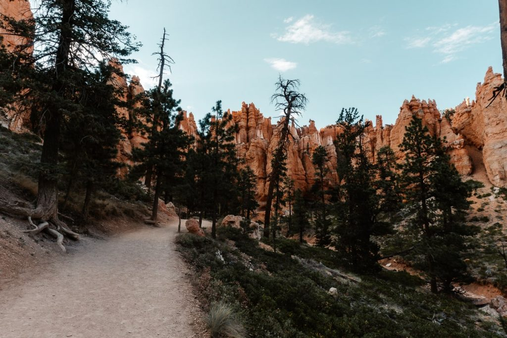 Pine forest on the Navajo Loop Trail with red hoodoos in the distance